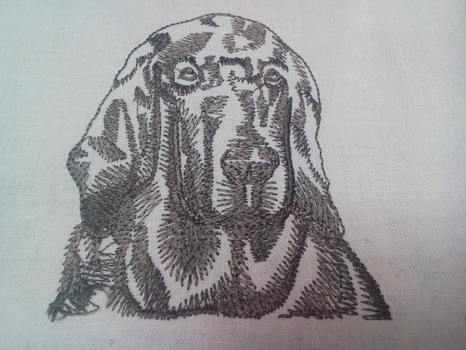 Írsky setter - pes vysvika zastavy.com